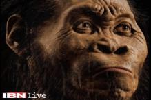 New human-like species discovered in South Africa, scientists name it Homo Naledi