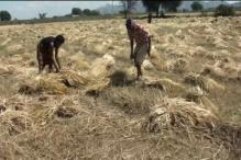 Would set up panel to re-look policy on farmers: Centre to SC