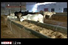 Cow shelter owner shot dead in Gurgaon