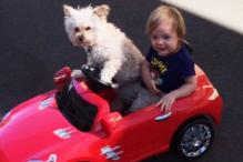 This video of a dog driving around a toddler in a toy car is the cutest thing you will see today