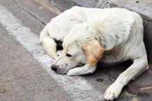 How a purple liquid is chasing dogs away and baffling vets in Kolkata