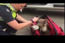 Fire fighters battle major bush fire, rescue baby koala bear