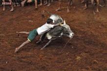 Jallikattu should remain banned. Here is why