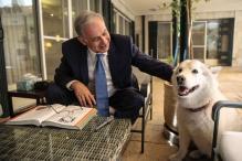 Israeli PM's dog bites political visitors