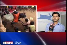 Decision to allow 'Jallikattu' politically motivated, claim animal rights activists