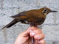 New species of bird discovered in Arunachal Pradesh