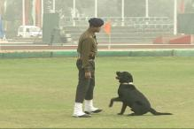 Army's dog squad to make debut at Republic Day