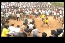 No Jallikattu this year as SC stays Centre's notification allowing the event