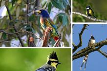 Birds of the Kumaun Himalayas