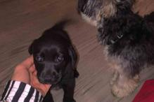 Justin Bieber introduces his new puppy Phil using social media