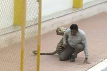 Leopard captured from Bengaluru school escapes from Bannerghatta Biological Park