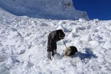 150 soldiers, 2 dogs helped rescue Lance Naik Hanamanthappa from Siachen