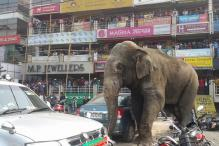 Wild elephant goes berserk in Siliguri, smashes cars and houses
