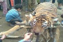 Villagers kill tiger in Dimapur village after it wounded a man