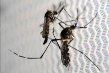 Timeline: Zika's origin and global spread