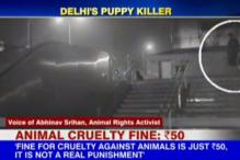 Watch: Gruesome attack on puppy, stray dogs in Delhi