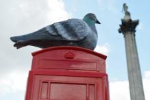 Pigeons are the new air pollution detectors in London