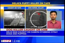 Stray dog stabbing: Police access more footage, get close-up of accused