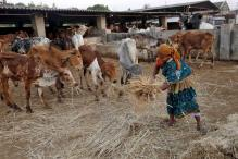 NHRC notice to Jharkhand over Muslim cattle traders' death