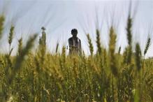 Bank Freezes Farmer's Accounts for Being Mallya's 'Guarantor'