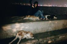 These stray dogs have made it their duty to guard women at Marine Drive in Mumbai
