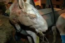 Shaktiman episode: Accident or cruelty?