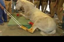 News 360: Horse crippled, is this Netagiri?