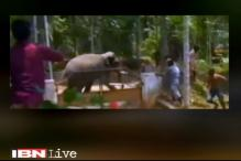Elephant goes on rampage in Kerala, destroys vehicles