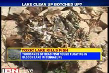 Bengaluru: Thousands of dead fish found floating in Ulsoor lake