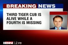 Tigress, 2 cubs poisoned to death at Pench National Park