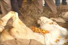 Police Horse Shaktiman Laid to Rest in Dehradun
