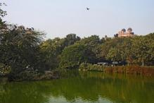 Delhi Zoo To Have A Butterfly Park