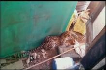 Leopard enters house in Valsad, injures 3 people