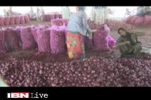 Farmers in Limbo as Onion Price Falls to 20p/kg in MP