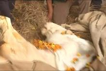 Uttarakhand Politicians 'Saddened' by Shaktiman's Death