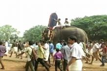 Thrissur Pooram Festival: Elephant Procession Steals Limelight