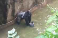 No End to Outrage Over Gorilla's Killing in Cincinnati Zoo