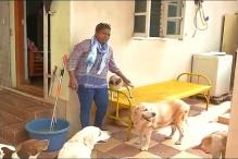 Bengaluru: Good Samaritan Runs Shelter for Stray Dogs