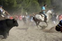 Spain Bans Killing in Controversial Bull-Lancing Festival