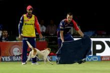 Dog Invades IPL Game, Fans Enjoy Entertainment That Followed
