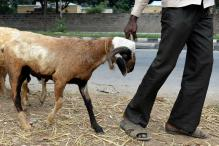 Karnataka Govt to Probe Whether Goats Sacrificed at Soma Yaga