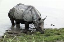 Why is it Difficult to Control Rhino Killing is Assam