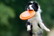 Six Fun Exercises To Try With Your Dog