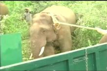 Forest Officials Capture Wild Elephant in TN