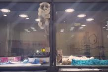Cat's Daring Prison Break To Be With Its Pup Bestie Will Fill You With Joy