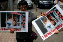 Chinese Calls for a Ban on Dog Meat Festival