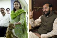 Javadekar's Environment Ministry Allows Culling of Animals, Maneka Fumes