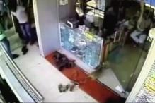 Watch: Monkey Steals Rs 10,000 from Jewellery Shop in Guntur