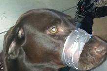 Animal Cruelty: US Woman Sentenced For Taping Pet Dog's Mouth Shut