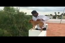 Video Shows Man Throwing Dog from Rooftop, Police Say He's MBBS Student